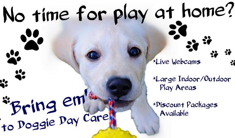 bring em to doggie day care for website.jpeg
