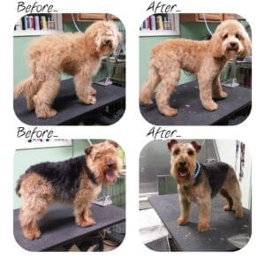 Some of our Award Winning Dog Groomer's work!