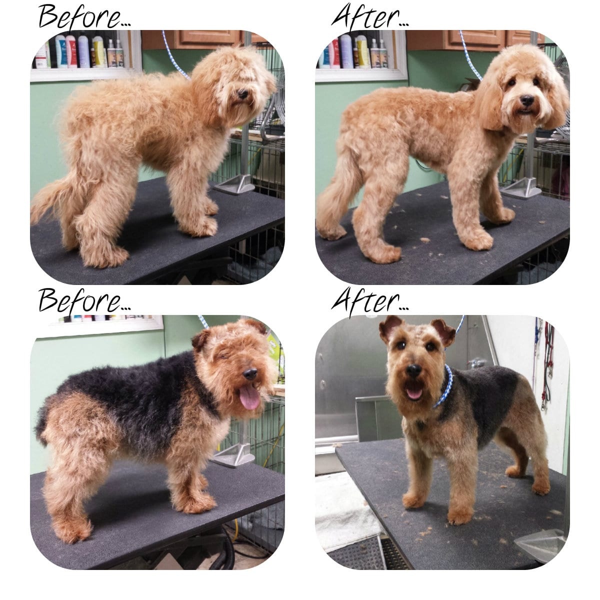 Grooming Leader Of The Pack Dog Grooming In Bethlehem Allentown