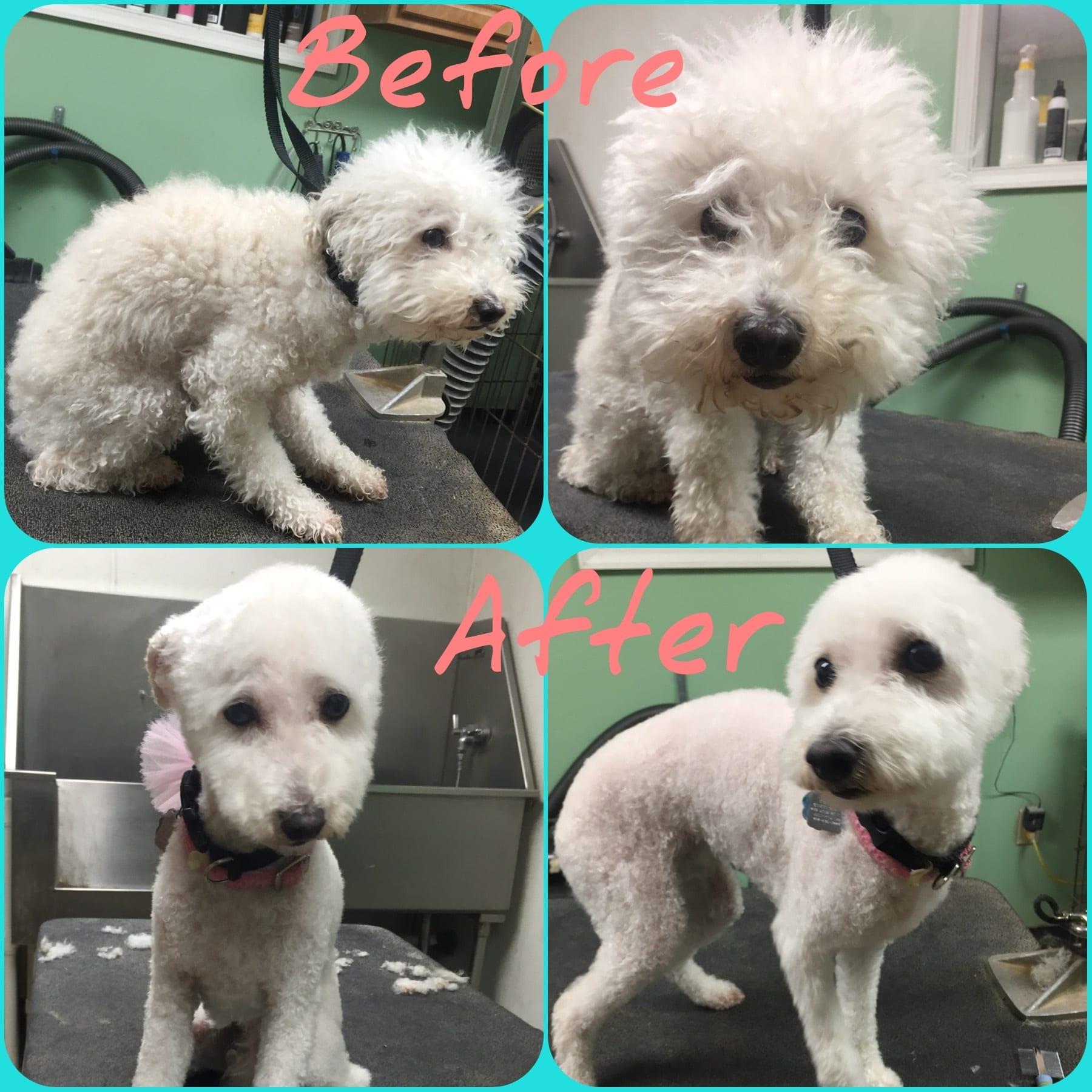 Grooming Leader Of The Pack Dog Grooming In Bethlehem Allentown