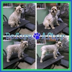 Dog Grooming Allentown PA