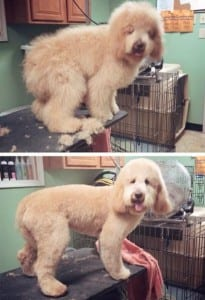 Dog Grooming Easton PA