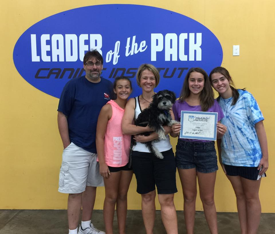 Dog Training - Leader of the Pack