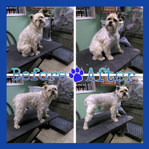 Before & After Dog Grooming in Bethlehem, PA